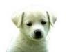 flesh2 - éleveur canin Dogzer
