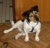 lelie_80 - éleveur canin Dogzer