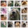 petitchiendu63 - éleveur canin Dogzer