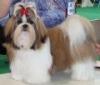 Liloo44 - éleveur canin Dogzer
