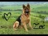 justinelouis4 - éleveur canin Dogzer