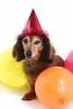 wen10 - éleveur canin Dogzer