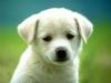 mama3599 - éleveur canin Dogzer