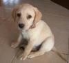 jenita14 - éleveur canin Dogzer