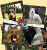 sarah121416 - éleveur canin Dogzer
