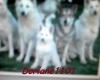 doriane1101 - éleveur canin Dogzer