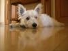 evadefraissinette - éleveur canin Dogzer