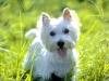 axelletaylor3 - éleveur canin Dogzer