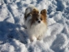 zebase - éleveur canin Dogzer