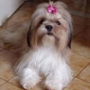 Dine-Amite57 - éleveur canin Dogzer