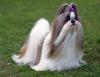 ninon79 - éleveur canin Dogzer