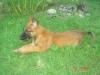 a.2000 - éleveur canin Dogzer