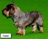 fab54 - éleveur canin Dogzer