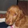 miam_sister - éleveur canin Dogzer