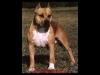 cocow59460 - éleveur canin Dogzer