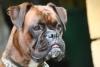 valoudu10000 - éleveur canin Dogzer