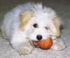 Doudou99_01 - éleveur canin Dogzer