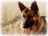 lalane38 - éleveur canin Dogzer