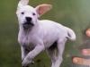 choupachoupsa - éleveur canin Dogzer