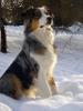 camillecharline - éleveur canin Dogzer