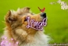 Lima6 - éleveur canin Dogzer