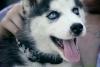 21850 - éleveur canin Dogzer