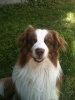 Helma1 - éleveur canin Dogzer