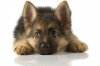 50lululila50 - éleveur canin Dogzer