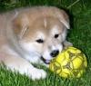 Shal - éleveur canin Dogzer
