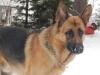 audy14 - éleveur canin Dogzer