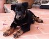 ptiteblonde41 - éleveur canin Dogzer