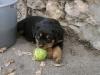 magichat - éleveur canin Dogzer