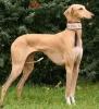 Animaux47000 - éleveur canin Dogzer