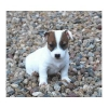 Lidyane - éleveur canin Dogzer