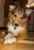 loumya - éleveur canin Dogzer