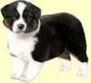 GabrielleHain - éleveur canin Dogzer