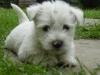 coki5351 - éleveur canin Dogzer