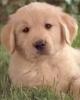 FENZUNG - éleveur canin Dogzer
