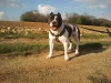 antho54 - éleveur canin Dogzer