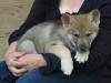 jadethieulin - éleveur canin Dogzer