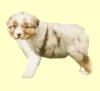 bergeraustralien6 - éleveur canin Dogzer