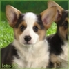 lotto98 - éleveur canin Dogzer