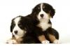 audrey37888 - éleveur canin Dogzer