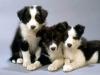 mauriere - éleveur canin Dogzer