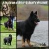 eole66 - éleveur canin Dogzer