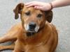 KENNTMICHNICHT - éleveur canin Dogzer