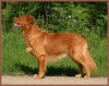 superdogzer - éleveur canin Dogzer