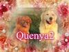 Quenya2 - éleveur canin Dogzer