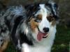 cecejanko - éleveur canin Dogzer