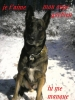 malinoise5267 - éleveur canin Dogzer